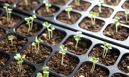 https://exportpulse.com/wp-content/uploads/2021/04/planting-seeds.jpg